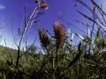 desert_wildflowers.jpg